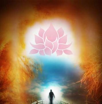 lotus tarot