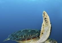 Pisces Tarot